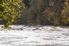 与五颜六色的树和河急流的美好的秋天风景在阳光下 图库摄影
