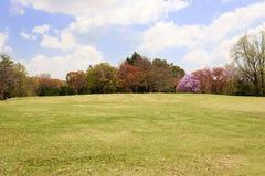 与五颜六色的树的草坪领域 免版税库存照片
