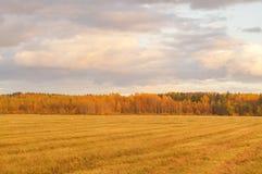 与五颜六色的树的绿色领域在天际 库存图片