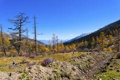 与五颜六色的森林的山秋天横向 库存图片