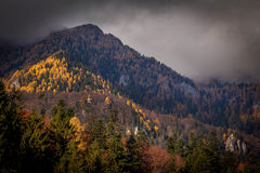 与五颜六色的森林的山秋天风景 免版税库存照片