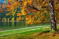 与五颜六色的森林, St阿那湖,特兰西瓦尼亚,罗马尼亚的秋天风景 图库摄影