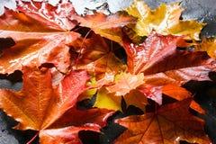 与五颜六色的槭树叶子的秋天背景 图库摄影