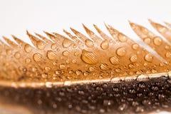 与五颜六色的母鸡羽毛和水下落的抽象构成 免版税库存图片