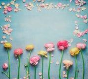 与五颜六色的毛茛花和瓣的可爱的花卉框架在绿松石土气背景 欢乐问候概念,平的la 图库摄影