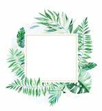 与五颜六色的热带叶子的五颜六色的花卉框架 皇族释放例证