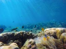与五颜六色的热带鱼的珊瑚礁风景 与阳光光芒的蓝色海水 免版税库存图片