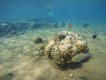 与五颜六色的热带鱼的珊瑚礁风景 库存照片