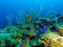 与五颜六色的热带鱼的水下的场面在海礁石附近 免版税库存图片