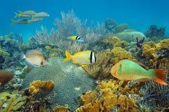 与五颜六色的热带鱼的水下的珊瑚礁 库存图片