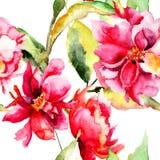 与五颜六色的牡丹花的无缝的墙纸 免版税库存图片
