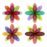 与五颜六色的瓣的花 免版税库存照片