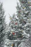 与五颜六色的电灯泡,圣诞树的冬天树。 免版税库存图片