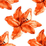 与五颜六色的百合的无缝的样式在白色背景开花 套开花花卉为婚姻的邀请 免版税库存照片