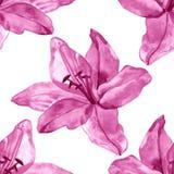 与五颜六色的百合的无缝的样式在白色背景开花 套开花花卉为婚姻的邀请 库存照片