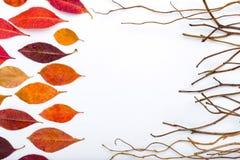 与五颜六色的秋叶和干燥棍子的框架 免版税库存照片