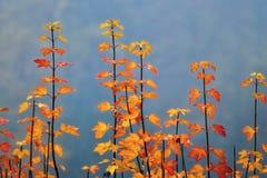 与五颜六色的秋叶的分支 库存图片