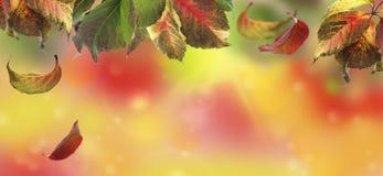 与五颜六色的秋叶的拼贴画 图库摄影
