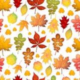 与五颜六色的秋叶的无缝的样式导航背景 免版税库存照片