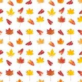 与五颜六色的秋叶的无缝的模式 库存图片