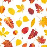 与五颜六色的秋叶的无缝的模式 库存照片