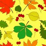 与五颜六色的秋天叶子的无缝的样式 库存图片