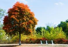 与五颜六色的秋天叶子的树在长凳附近 库存照片