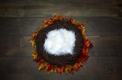 与五颜六色的秋天地方教育局的婴儿巢幻想背景照片支柱 库存图片