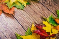 与五颜六色的秋天槭树的秋天背景在土气木桌离开 感恩节概念 绿色,黄色 库存照片