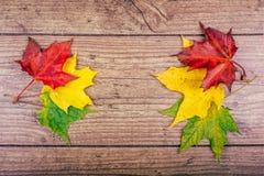 与五颜六色的秋天槭树的秋天背景在土气木桌离开 感恩节概念 绿色,黄色 图库摄影
