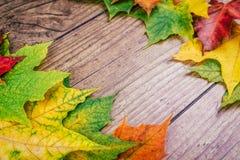 与五颜六色的秋天槭树的秋天背景在土气木桌离开 感恩节概念 绿色,黄色 免版税图库摄影