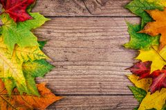 与五颜六色的秋天槭树的秋天背景在土气木桌离开 感恩节概念 绿色,黄色 免版税库存图片