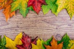 与五颜六色的秋天槭树的秋天背景在土气木桌离开 感恩节概念 绿色,黄色 库存图片