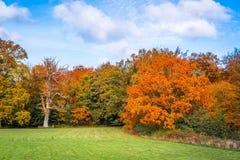 与五颜六色的红色叶子的树 免版税库存照片