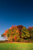 与五颜六色的结构树的秋天横向 库存图片
