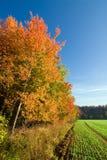 与五颜六色的结构树的秋天横向 免版税库存图片