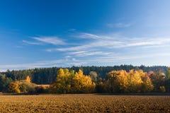 与五颜六色的结构树的秋天横向 库存照片