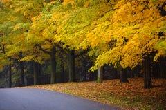 与五颜六色的结构树的秋天路 免版税库存图片