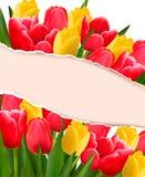 与五颜六色的花的假日背景 免版税图库摄影