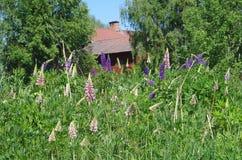 与五颜六色的花的一个领域 免版税库存照片