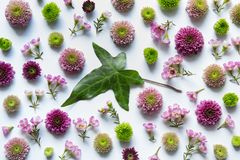 与五颜六色的花的安排 免版税库存照片