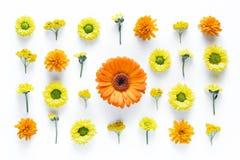 与五颜六色的花的样式在白色背景 免版税图库摄影