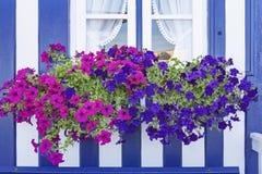 与五颜六色的花的窗口 免版税图库摄影