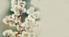 与五颜六色的花的美好的花卉背景…背景 夏时与蓬松花的静物画场面,宏观看法 浅深度的域 定调子 免版税库存图片