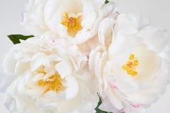 与五颜六色的花的美好的花卉背景…背景 免版税库存照片