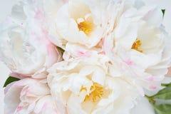 与五颜六色的花的美好的花卉背景…背景 库存图片