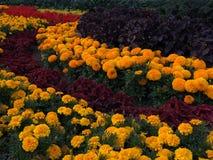 与五颜六色的花的花床 免版税库存照片