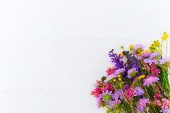 与五颜六色的领域的白色背景开花,空隙 库存照片
