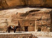 与五颜六色的马鞍等待的游人的马Petra的约旦 免版税库存图片