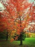 与五颜六色的结构树的秋天横向 免版税库存照片